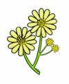 yellowaster034