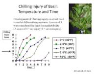 Chilling_Injury_of_Basil