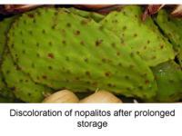 Discoloration_of_nopalitos