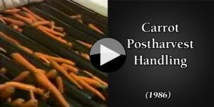 Carrot Postharvest Handling