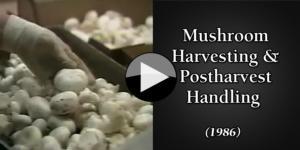 Mushroom Harvesting & Postharvest Handling