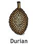 durian_english250x350