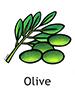 olive_english250x350