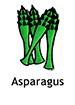 asparagus_english250x350