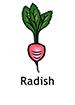 radish_english250x350