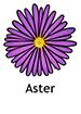 aster_english250x350