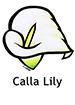 callalily_english250x350