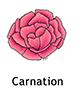 carnation_english250x350