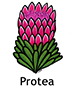 protea_english250x350