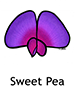 sweet_pea250x350