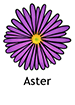 aster_spanish250x350