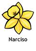 daffodil_spanish250x350