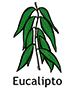 eucalyptus_spanish250x350