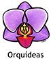 orchid_spanish250x350