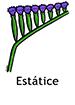 statice_spanish250x350
