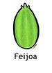 Feijoa_French250x350