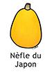 Loquat_French250x350
