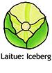 IcebergLettuce_French250x350