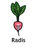 Radish_French250x350