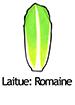 RomaineLettuce_French250x350