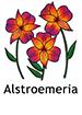 Alstroemeria_French250x350