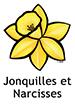 Daffodil_French250x350