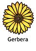Gerbera_French250x350