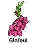 Gladiola_French250x350