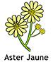 YellowAster_French250x350