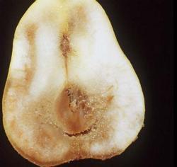 Senescent Scald and Core Breakdown. Pear, Bartlett