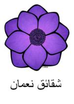 Anemone Arabic