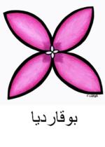 Bouvardia Arabic