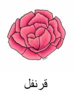 Carnation Arabic