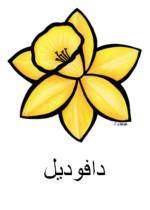 Daffodil Arabic