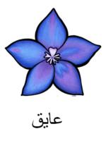 Delphinium Arabic