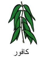 Eucalyptus Arabic