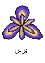 Iris Arabic