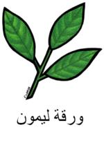 Lemonleaf Arabic