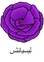 Lisianthus Arabic
