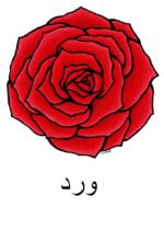 Rose Arabic