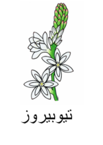 Tuberose Arabic