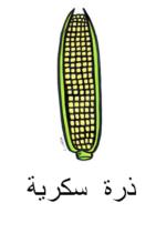 Corn Arabic