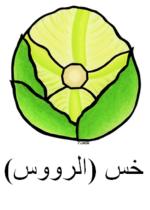 Crisphead Lettuce Arabic
