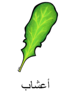 Herbs Arabic