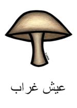 Mushroom Arabic