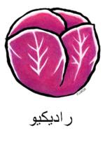 Radicchio Arabic