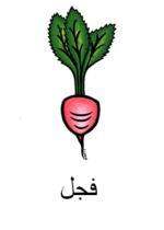 Radish Arabic