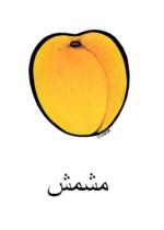 Apricot Arabic