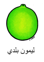 Lime Arabic