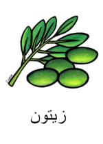 Olive Arabic